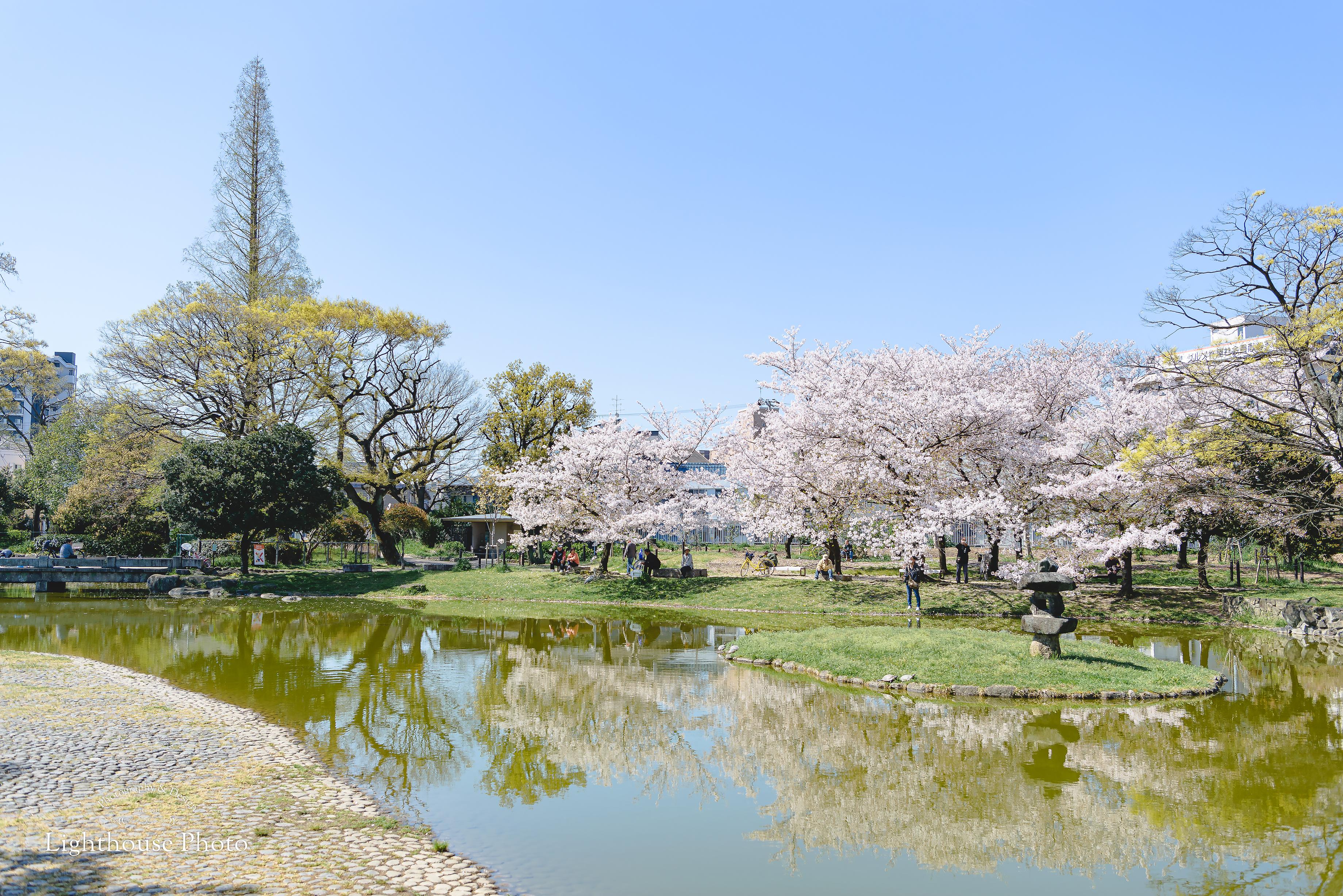 お宮参りの後に、桜のきれいな公園でロケーションフォト@住吉公園-1